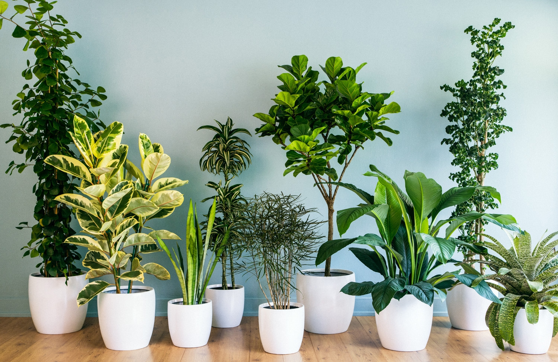 Excepcional 12 plantas perfeitas para decorar sua casa - Goiânia PA95