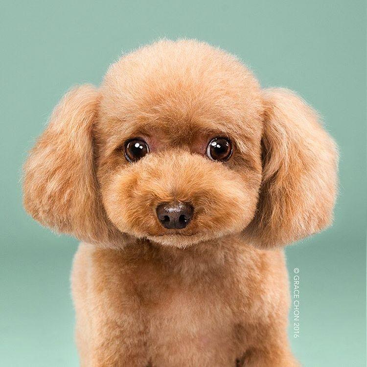 O cãozinho fofo