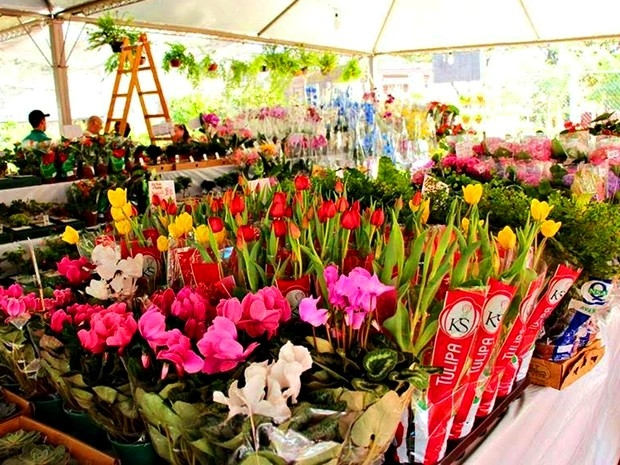 Resultado de imagem para Festival de Flores de Holambra reúne 150 espécies de plantas para exposição e venda