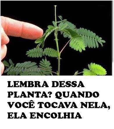 plantinha