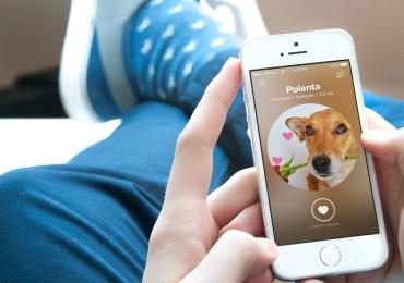 É do Brasil! Startup nacional cria Tinder para adotar cães abandonados