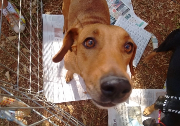 Adote um amigo! Conheça os grupos de adoção de animais aqui em Goiânia