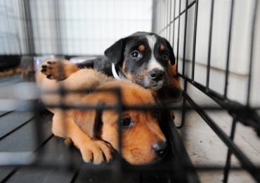 Cidade dá desconto em imposto para quem adotar e cuidar bem de cães e gatos
