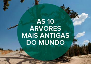 As 10 árvores mais antigas do mundo (uma delas está no Brasil!)