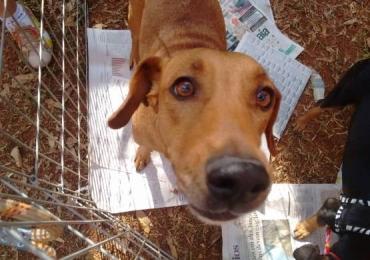 Goiânia recebe feira de adoção de cães e gatos