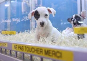 Pets shops brasileiros estão proibidos de manter bichinhos em gaiolas e vitrines