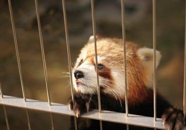 Costa Rica é o primeiro país do mundo a fechar todos os seus zoológicos
