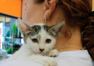 Goiânia recebe feira de adoção de animais de estimação