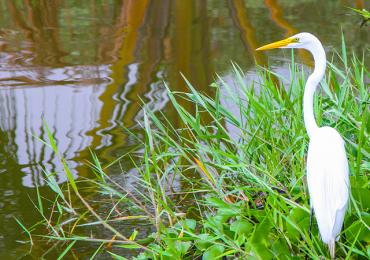 Conheça um parque charmoso e ainda pouco conhecido de Goiânia em fotos incríveis