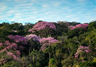 Conheça um verdadeiro santuário natural pertinho de Goiânia