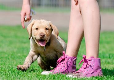 Adote um amigo: associação procura novas famílias para pets abandonados