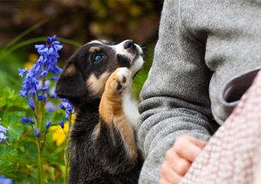 Adote um amigo: associação promove feira de adoção de pets em Goiânia