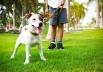 Aplicativo que oferece passeio para cães chega a Brasília