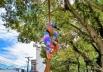 Conheça a artista de rua que faz acrobacias amarrada em uma árvore no Centro de Goiânia