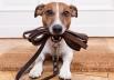 5 lugares em Goiânia para você aproveitar a sexta-feira sem deixar seu pet em casa
