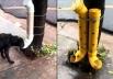 Animais de rua podem ganhar comedouros e bebedouros em praças de Goiânia