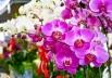 Shopping de Brasília recebe feira gratuita de orquídeas