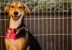 Feira de adoção de animais em Brasília dá oportunidade de novo lar aos bichinhos