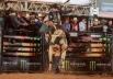 Brasília recebe campeonato de montaria em touros