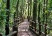 8 Parques Ecológicos em Brasília e arredores perfeitos para trilhas