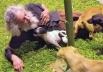 Idoso que morava com 18 cães e 16 gatos debaixo da ponte, após ordem de 'despejo'  ganha lote da Prefeitura de Goiânia