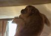 Macaco é flagrado invadindo loja de decoração em Goiânia; veja imagens