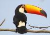Pesquisadores da UFG mapeiam 271 aves no Cerrado