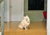 Cadela de Boechat espera todas as noites pela chegada de seu dono, diz Veruska