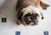 Juiz impede eutanásia de cadela diagnosticada com Leishmaniose em Goiânia