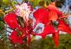 10 lindas flores do Cerrado para comemorar a chegada da Primavera
