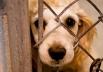 Governo de Goiás aprova Lei que penaliza quem pratica maus tratos de animais