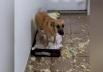 Após destruir colchão e viralizar nas redes sociais, cão Chico volta a aprontar na casa da Dona; assista