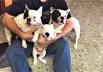 Donos oferecem recompensa para quem devolver cães roubados em Goiânia