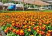 FestFlor: evento gratuito em Brasília reúne estandes, oficinas de jardinagem e paisagismo