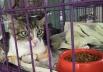 Brasília recebe última feira de adoção de cães e gatos do ano