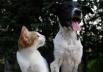 Vigilância Ambiental do DF promove feira de adoção de animais neste fim de semana