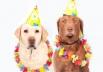 CarnaDog: hamburgueria de Brasília promove Carnaval para pets com feira de adoção
