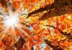 Outono começa nesta quarta-feira; veja como ele será em Uberlândia