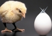 13 tweets que provam que Goiânia é um ovo