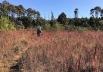 Projeto em Brasília inaugura trilhas ecológicas