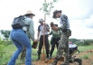 Anápolis, em Goiás, ganha o maior pomar urbano de frutos do Cerrado do Brasil