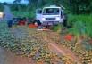 Caminhão carregado com pequi capota em Goiás e carga fica espalhada na pista