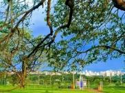 7 parques e bosques em Uberaba e região para curtir bons passeios ao ar livre
