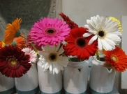 A Primavera chegou! Confira 10 flores e plantas fáceis de cultivar em seu apartamento