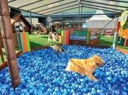 São Paulo recebe espaço da Turma da Mônica para cães com atividades de graça