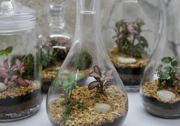 Goiânia recebe exposição de mini jardins e biomas com entrada gratuita | Mostra expõe peças simples e sofisticadas criadas especialmente para um público urbano