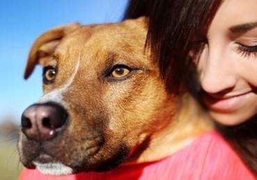 Site possibilita hospedagem de cães de forma fácil e acessível