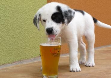 Cervejaria Santuário lança em Brasília cerveja própria para cachorro