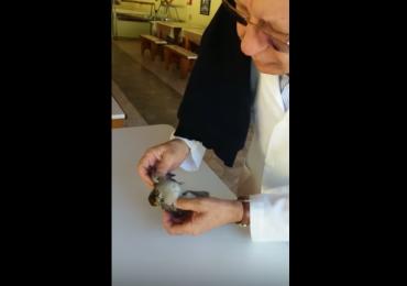 Médico faz reanimação em passarinho e vídeo viraliza