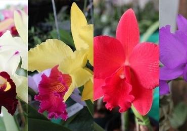 Uberlândia recebe VII exposição de orquídeas, em agosto